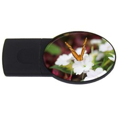 Butterfly 159 2gb Usb Flash Drive (oval) by pictureperfectphotography