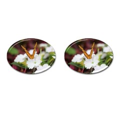 Butterfly 159 Cufflinks (oval) by pictureperfectphotography