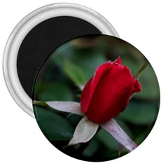 Sallys Flowers 032 001 3  Button Magnet by pictureperfectphotography