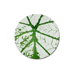 Leaf Patterns Magnet 3  (round) by natureinmalaysia