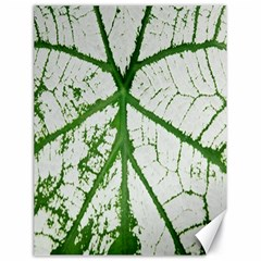 Leaf Patterns Canvas 18  X 24  (unframed) by natureinmalaysia