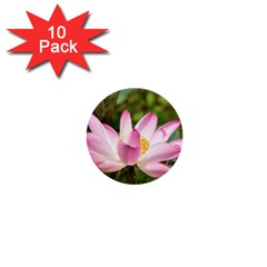 A Pink Lotus 1  Mini Button (10 Pack) by natureinmalaysia