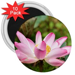 A Pink Lotus 3  Button Magnet (10 Pack) by natureinmalaysia