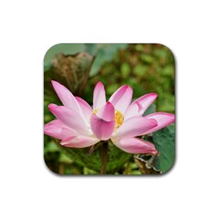 A Pink Lotus Drink Coasters 4 Pack (square) by natureinmalaysia