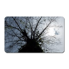 An Old Tree Magnet (rectangular) by natureinmalaysia