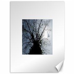 An Old Tree Canvas 36  X 48  (unframed) by natureinmalaysia
