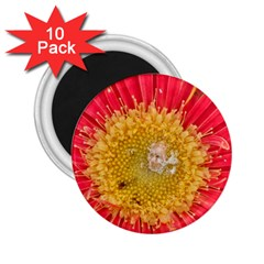 A Red Flower 2 25  Button Magnet (10 Pack) by natureinmalaysia