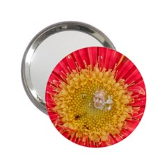A Red Flower Handbag Mirror (2 25 ) by natureinmalaysia