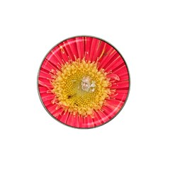 A Red Flower Golf Ball Marker 4 Pack (for Hat Clip) by natureinmalaysia