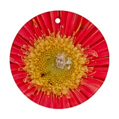 A Red Flower Round Ornament (two Sides) by natureinmalaysia