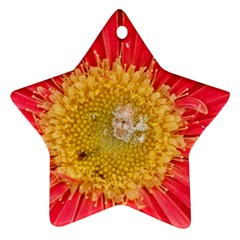 A Red Flower Star Ornament (Two Sides)