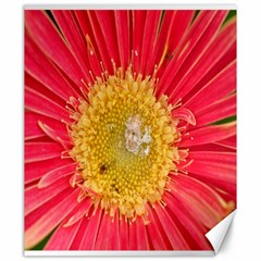 A Red Flower Canvas 20  X 24  (unframed) by natureinmalaysia