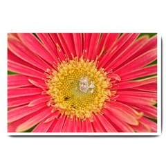 A Red Flower Large Door Mat by natureinmalaysia