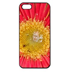 A Red Flower Apple Iphone 5 Seamless Case (black)