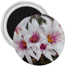 Bloom Cactus  3  Button Magnet by ADIStyle