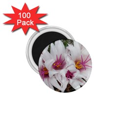 Bloom Cactus  1 75  Button Magnet (100 Pack) by ADIStyle