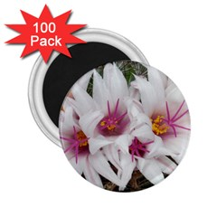 Bloom Cactus  2 25  Button Magnet (100 Pack) by ADIStyle