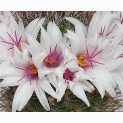 Bloom Cactus  Canvas 20  X 20  (unframed) by ADIStyle
