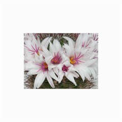 Bloom Cactus  Canvas 24  X 36  (unframed) by ADIStyle