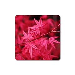 Red Autumn Magnet (square) by ADIStyle