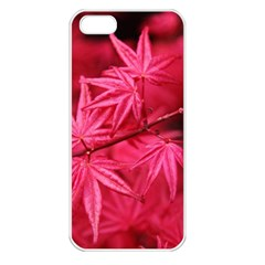 Red Autumn Apple Iphone 5 Seamless Case (white) by ADIStyle