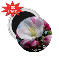 Apple Blossom  2 25  Button Magnet (100 Pack) by ADIStyle