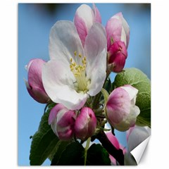 Apple Blossom  Canvas 16  X 20  (unframed) by ADIStyle