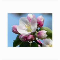 Apple Blossom  Canvas 24  X 36  (unframed) by ADIStyle