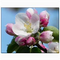Apple Blossom  Canvas 11  X 14  (unframed) by ADIStyle