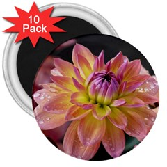 Dahlia Garden  3  Button Magnet (10 Pack) by ADIStyle