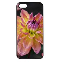 Dahlia Garden  Apple Iphone 5 Seamless Case (black) by ADIStyle