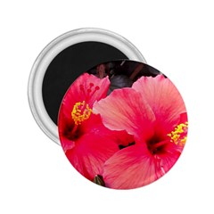 Red Hibiscus 2 25  Button Magnet by ADIStyle