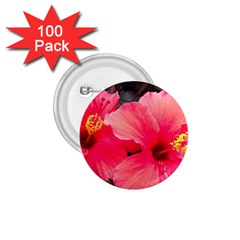 Red Hibiscus 1 75  Button (100 Pack)