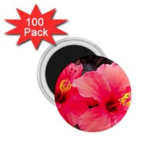 Red Hibiscus 1 75  Button Magnet (100 Pack) by ADIStyle