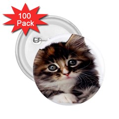 Curious Kitty 2 25  Button (100 Pack) by mysticalimages