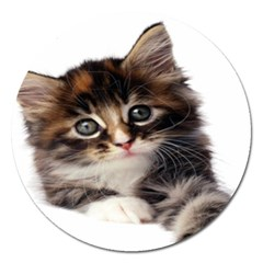 Curious Kitty Magnet 5  (Round) by mysticalimages