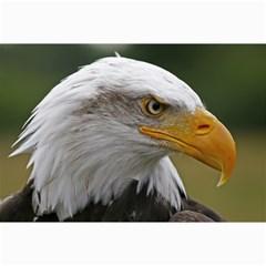 Bald Eagle (2) Canvas 12  X 18  (unframed) by smokeart