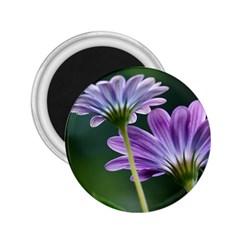 Flower 2 25  Button Magnet by Siebenhuehner