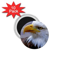 Bald Eagle 1 75  Button Magnet (10 Pack) by Siebenhuehner