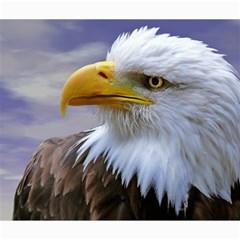 Bald Eagle Canvas 20  X 24  (unframed) by Siebenhuehner