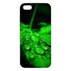 Waterdrops Iphone 5 Premium Hardshell Case by Siebenhuehner