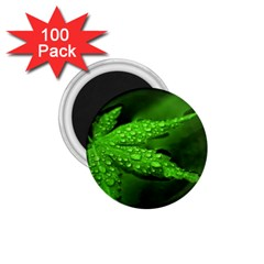 Leaf With Drops 1 75  Button Magnet (100 Pack) by Siebenhuehner