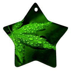 Leaf With Drops Star Ornament (two Sides) by Siebenhuehner