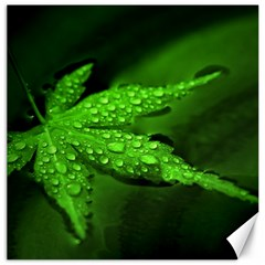 Leaf With Drops Canvas 12  X 12  (unframed) by Siebenhuehner