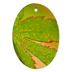 Leaf Oval Ornament by Siebenhuehner