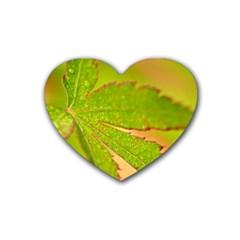 Leaf Drink Coasters 4 Pack (heart)  by Siebenhuehner