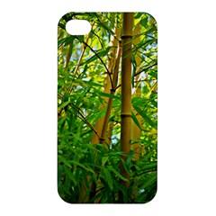 Bamboo Apple Iphone 4/4s Premium Hardshell Case by Siebenhuehner