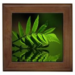 Leaf Framed Ceramic Tile by Siebenhuehner