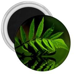 Leaf 3  Button Magnet by Siebenhuehner