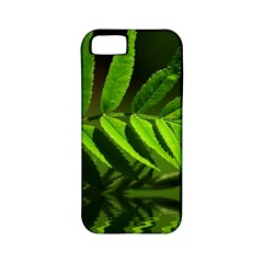 Leaf Apple Iphone 5 Classic Hardshell Case (pc+silicone) by Siebenhuehner